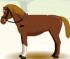 Cavalcare i Cavalli